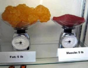 5lbs of muscle and fat